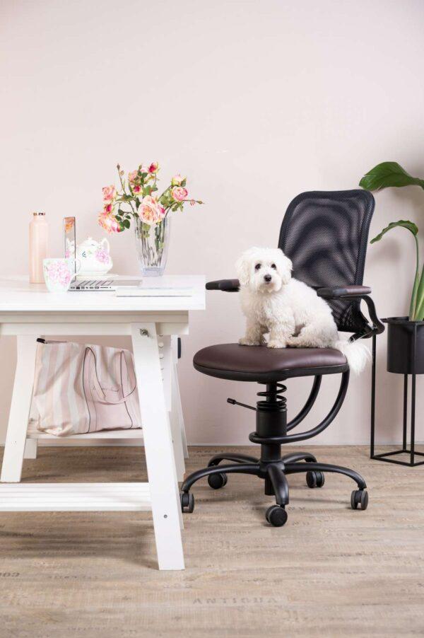 Kuža sedi na pisarniškem stolu zraven je miza