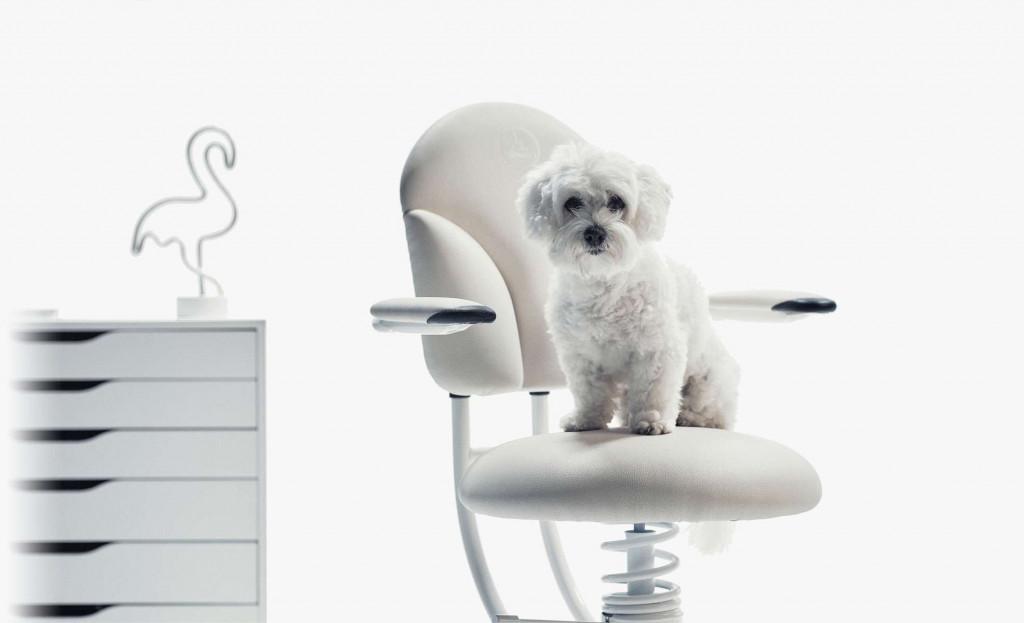 Kuža na belem pisarniškem stolu Basic